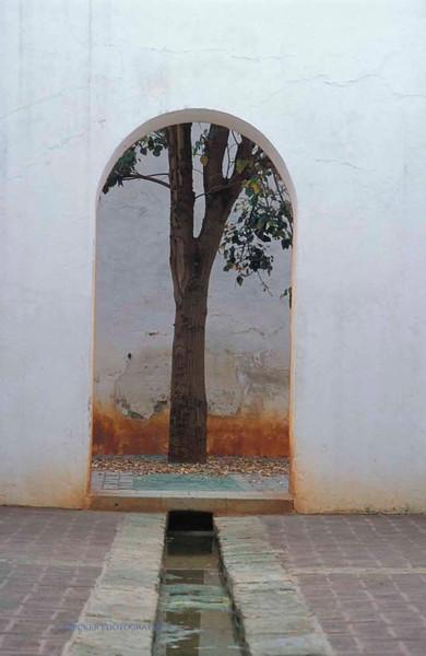 Tree in arch.jpg