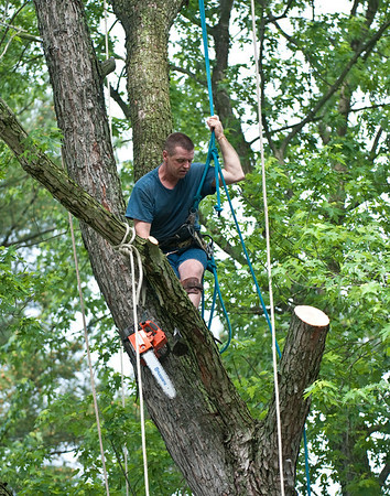 Mike's Tree Service.               609-864-4406