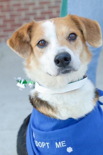 20110312 PetSmart Adoption Event-15.jpg