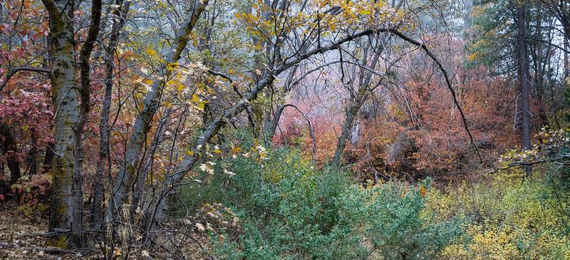 San_Bernardino_Mountains_Fall_Color_Trees_Panorama_DSC3291.jpg