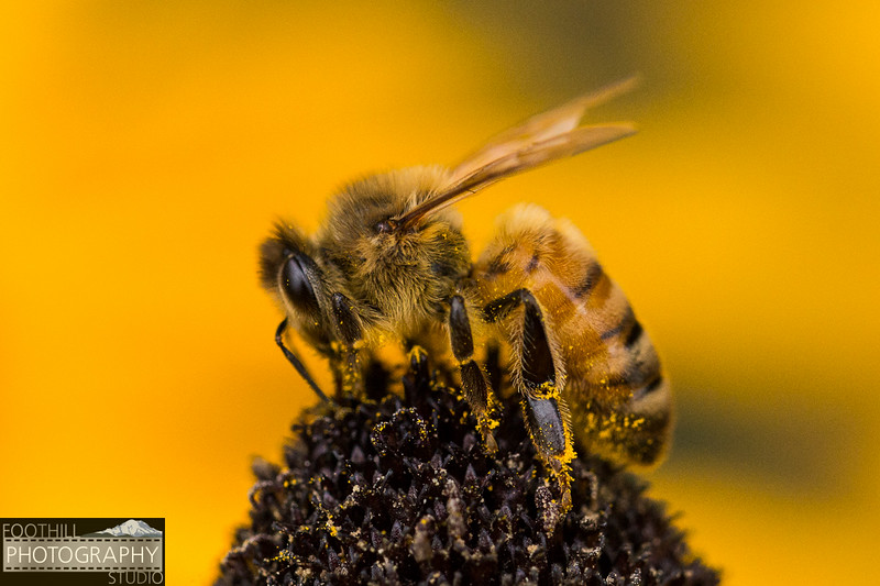 Bee Sml-102.jpg