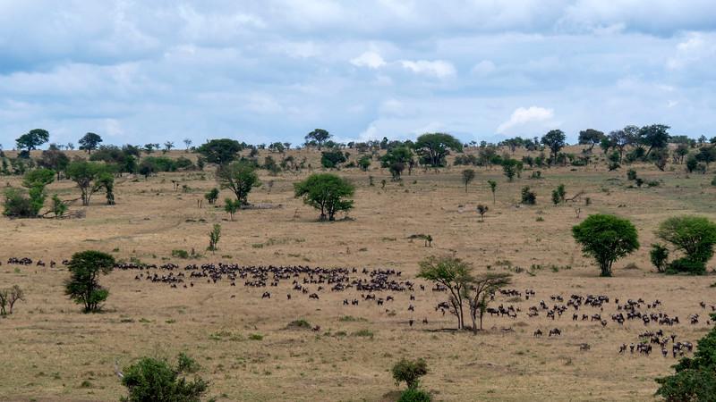 Tanzania-Serengeti-National-Park-Safari-Great-Migration-Wildebeest-01.jpg