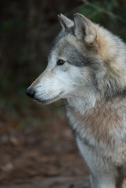 Seacrest Wolves_-38.jpg