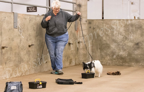 AKC Scent Work Trial Container Search Sunday 10 20 2019 Columbia MO