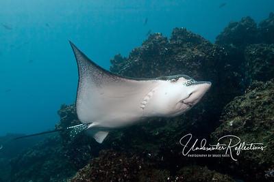 Galapagos - Sept 2011