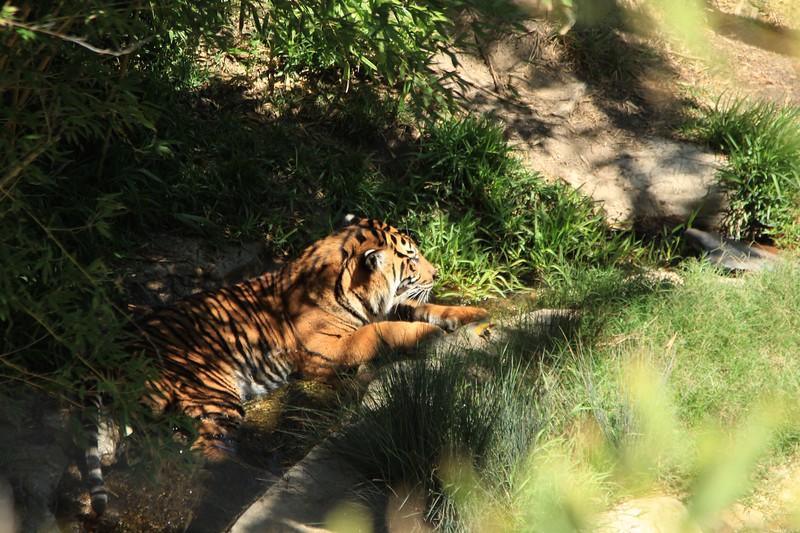 San Diego wild animal pakr 201700011.jpg
