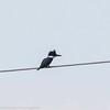 day 4 So FL Birding-352