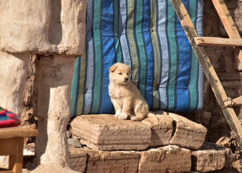 BOL_1697-7x5-Dog on Salt blocks.jpg