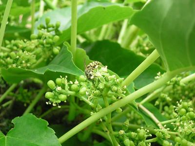 Garten2009