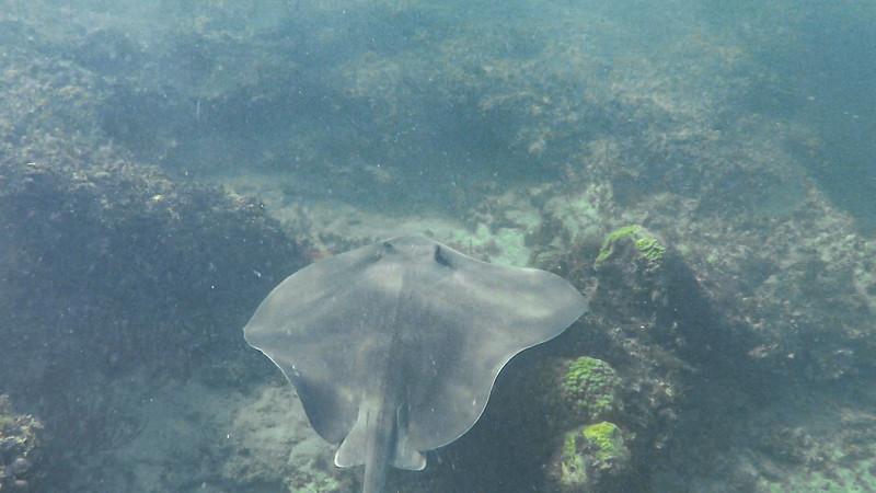 Snorkling with Fury Island Adventure, Key West, FL - Dec. 15, 2019-GOPR1860-2-002.jpg