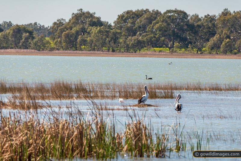 Greens Lake