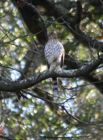 Arastradero warblers Jan 8, 2006
