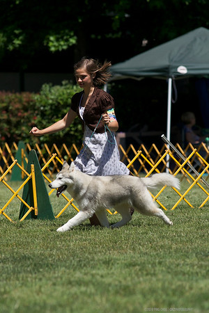 2010 Vallejo Dogshow