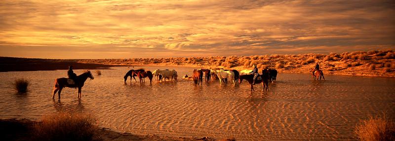Cattle Drive #13 resize .jpg
