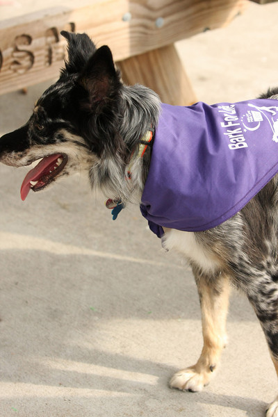 Bark for Life -- August 1st, 2009