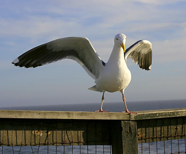 3886 Gull.jpg