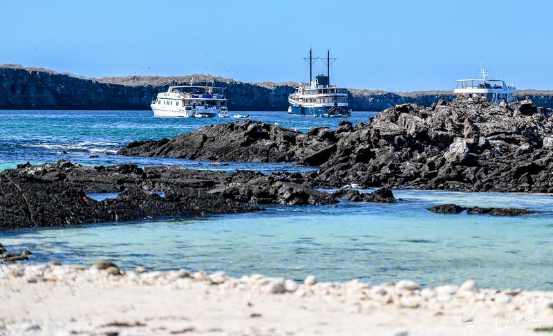 2018 Darwin's Bay Beach-18.jpg