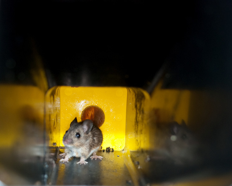Scroghill mouse 2