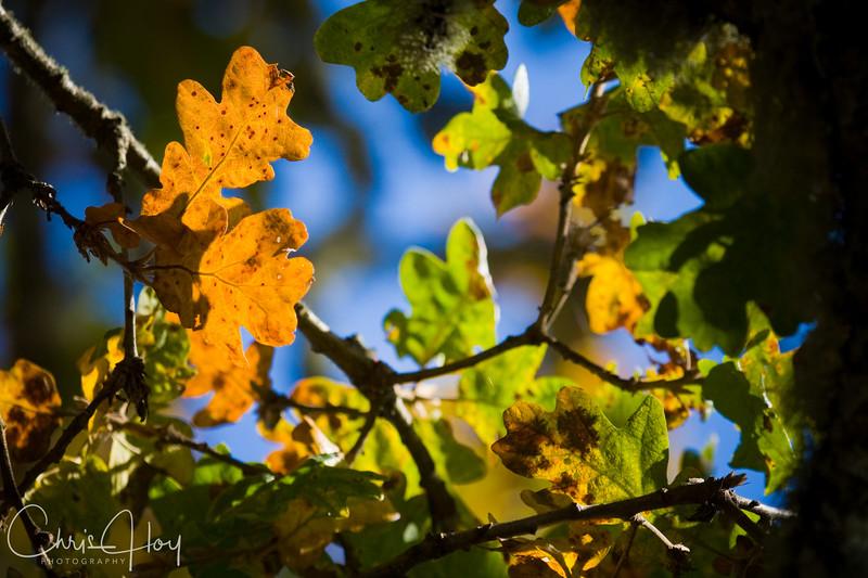 Fall Color, Woodpecker Trail, Finley NWR