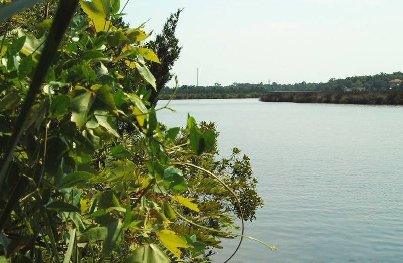 33 Tomoka River.jpg