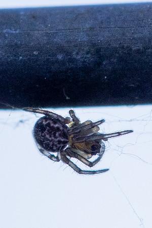20210505 Spider Macro