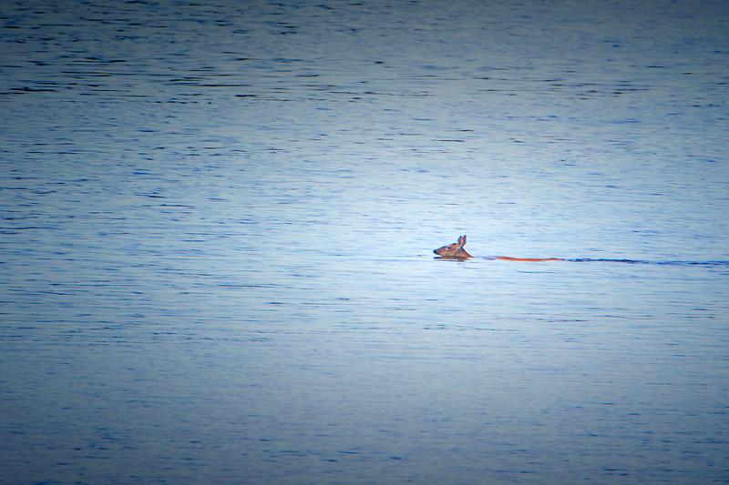 6.20.18 - Blackburn Creek Fish Nursery: Whitetail Deer