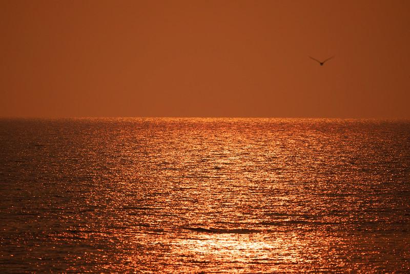 Ocean 59