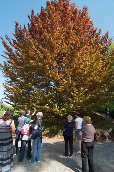 passeggiata per cercatori di alberi - Parco di Villa Genero, Torino - 10 aprile 2011