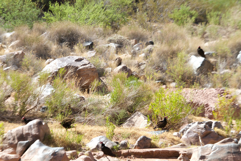2014_Grand_Canyon_WHDW2_7D 64