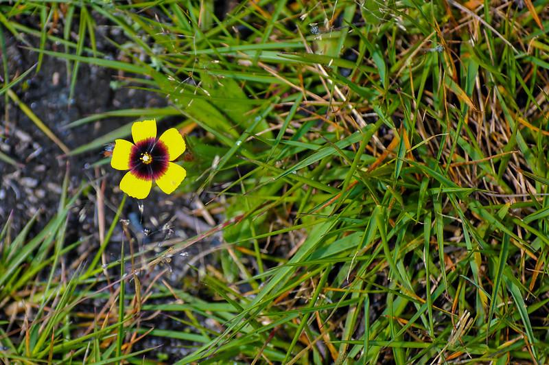 Vouzela-PR2 - Um Olhar sobre o Mundo Rural - 17-05-2008 - 7425.jpg