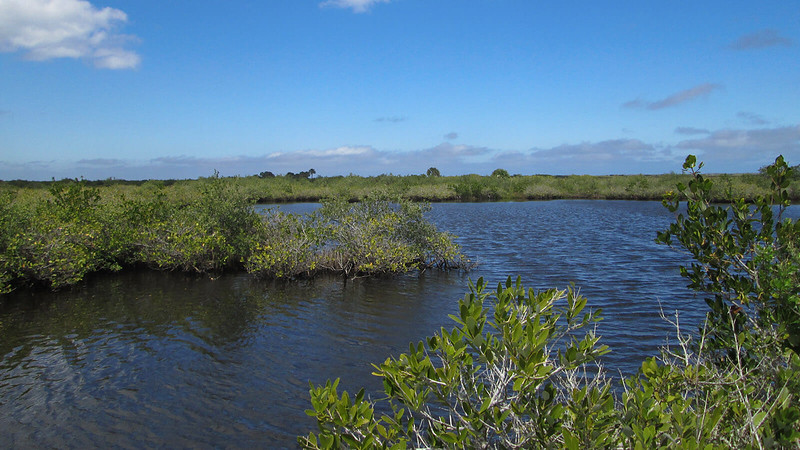 Lagoon in the impoundment