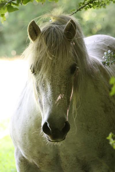 Mrs Kirby's Horse