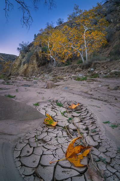 Castaic_Creek_Fall_Color_Southern_California_DSC3455.jpg