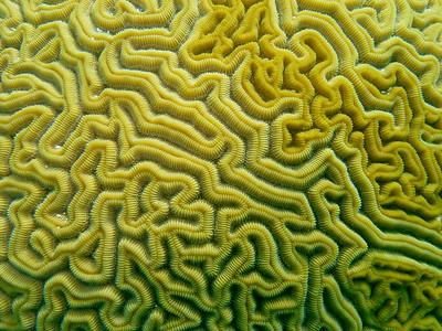 Coral & Anemones