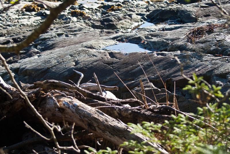 Maine Vacation-02893.jpg