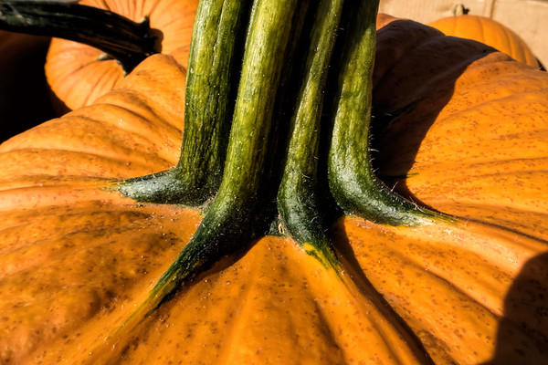 Fall Pumpkins, squash, gourds