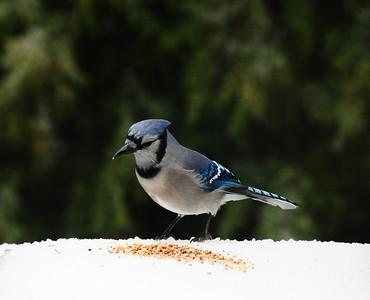 Winter Birds gallery 2