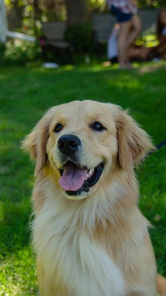 PuppyParty18-414.jpg