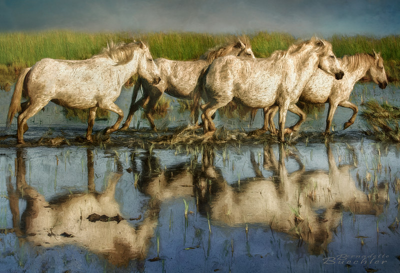 Marching On _The Camargue _ Provence, France.jpg
