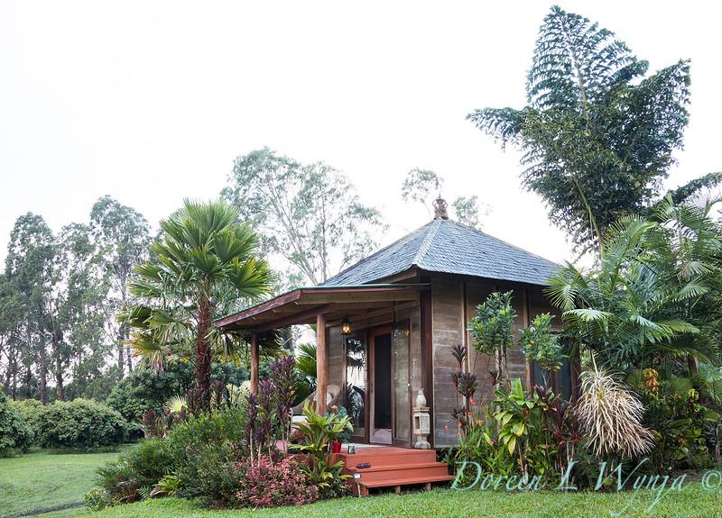 Caryota obtusa - gigas - Bali living structure - tropical landscape_3677.jpg