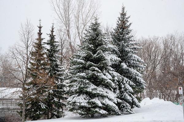 Winter in Westmount