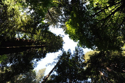 Muir Woods with Ming Hui