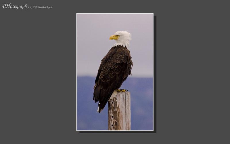 My Alaska 12-08-071.jpg