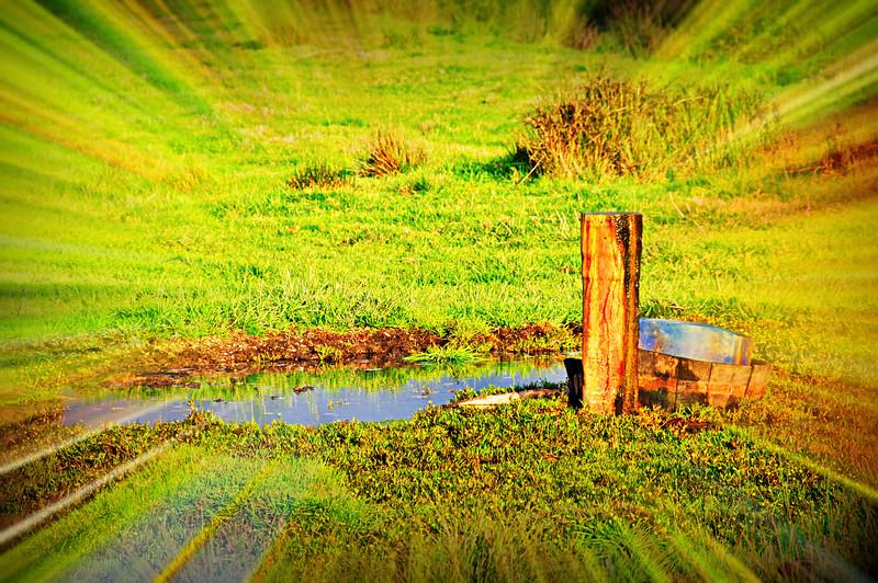 Baixo Vouga - Cacia - Aveiro - 20100324 - 6288_raw.jpg