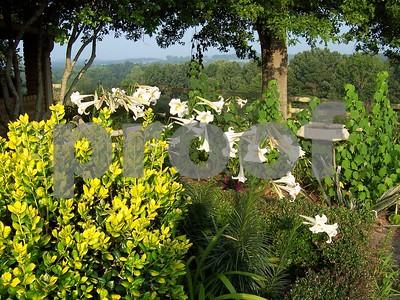 nightblooming-plants-can-heighten-your-garden-experience