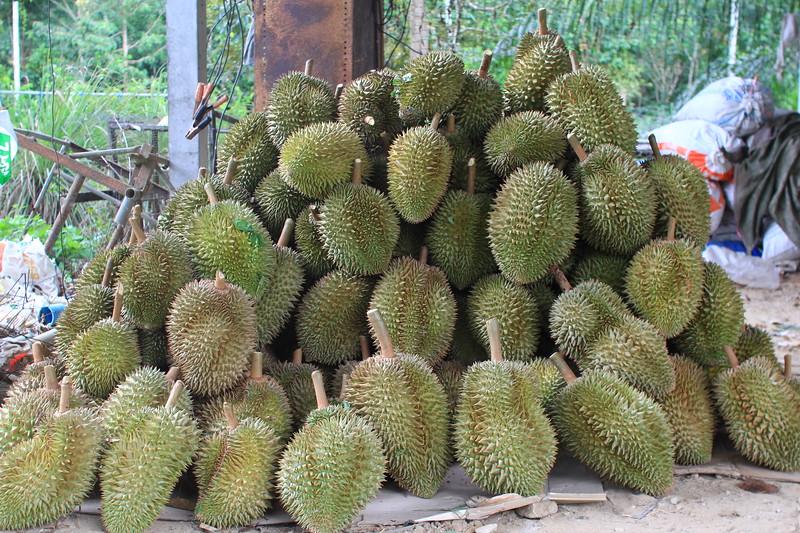 IMG_9906 durians.JPG