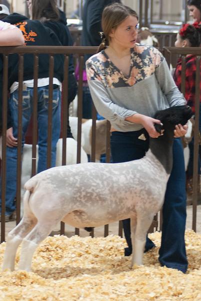 kay_county_showdown_sheep_20191207-31.jpg