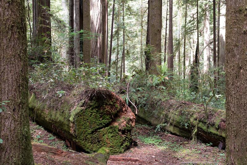 redwoodsFin-0999.jpg