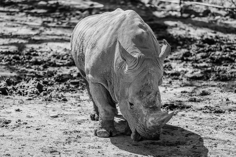 SafariWest2017-66.jpg
