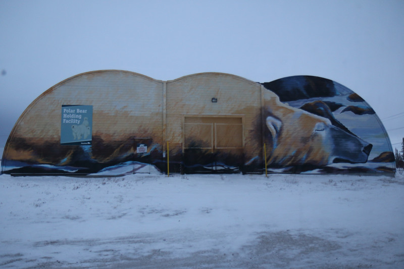 """Polar bear mural on the polar bear """"jail"""""""